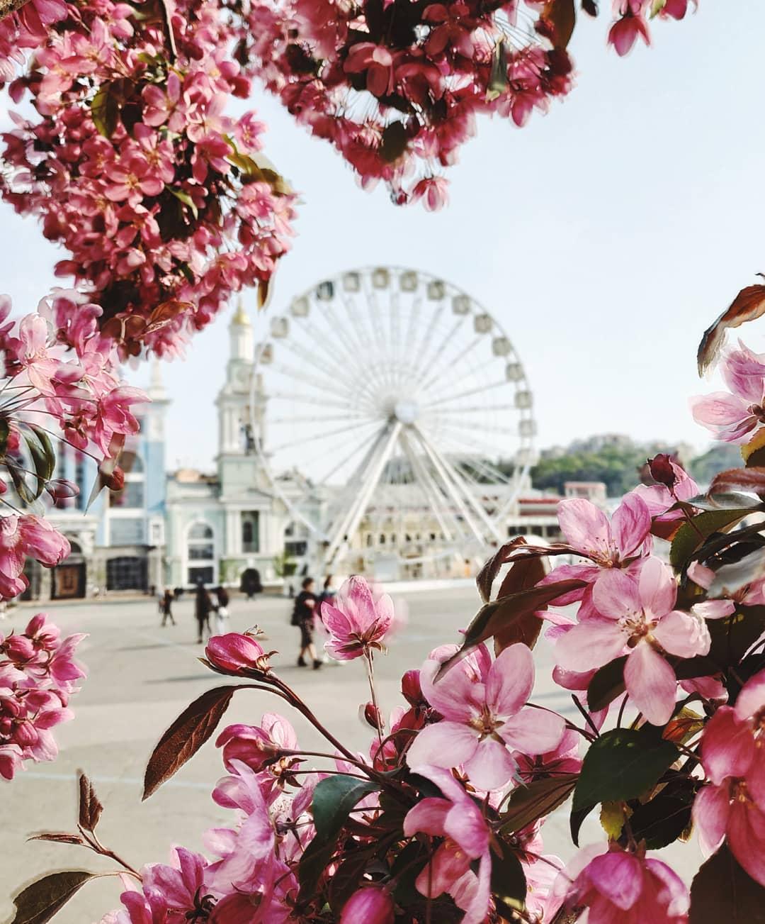 Столица цветет и пахнет. Фото: qulumulus
