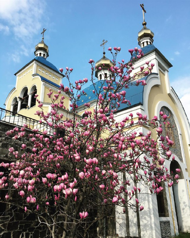Весенний Киев цвет и хорошеет с каждым днем все больше. Фото: @photographer_kathlyn