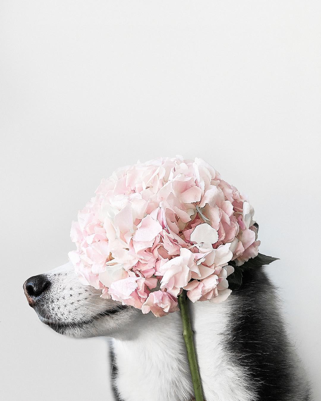 А кто сказал, что собаки не любят цветы?) Фото: @elineckajulia