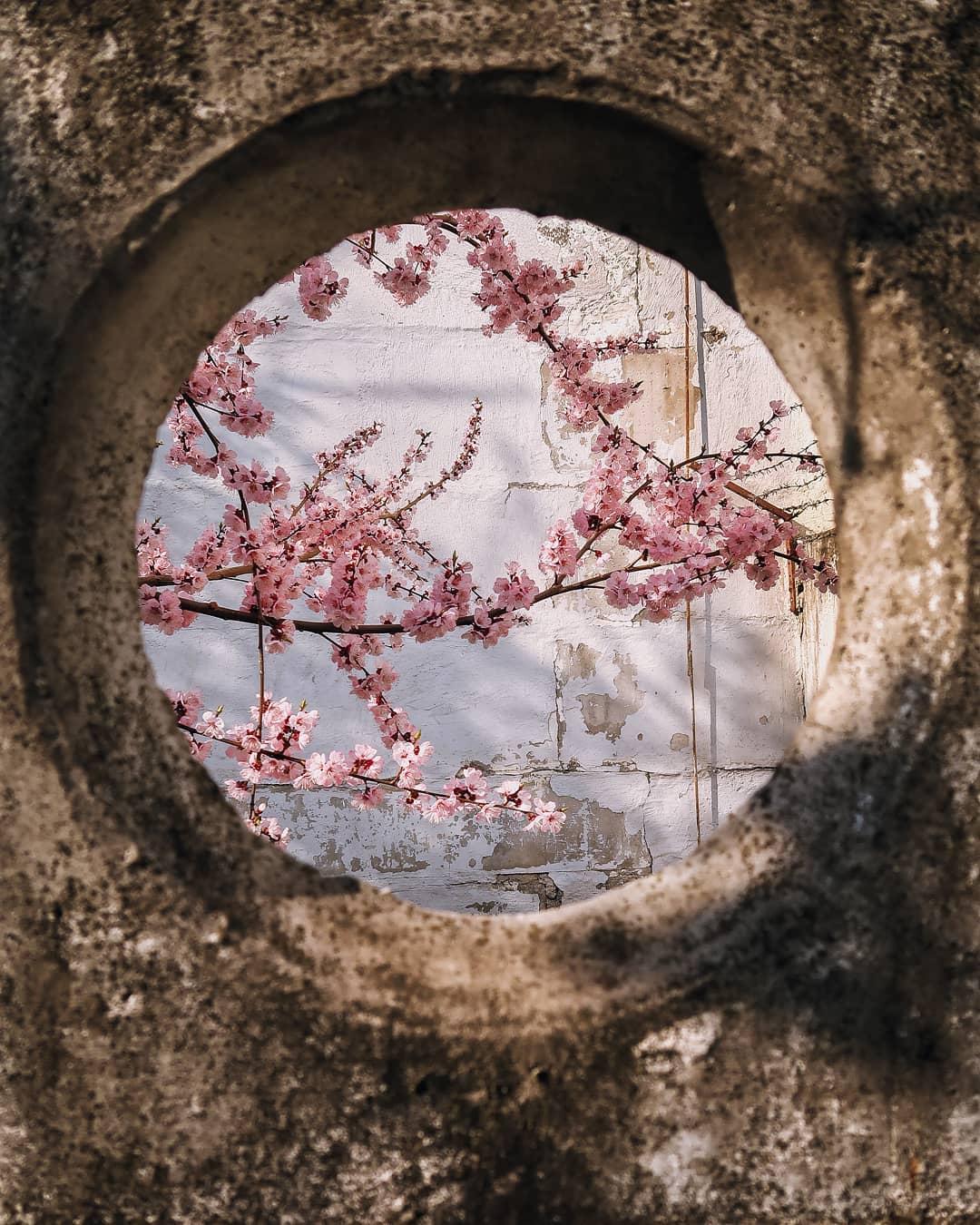 Даже в странных, забытых дворах есть что-то прекрасное. Фото: @wunderlust.robert