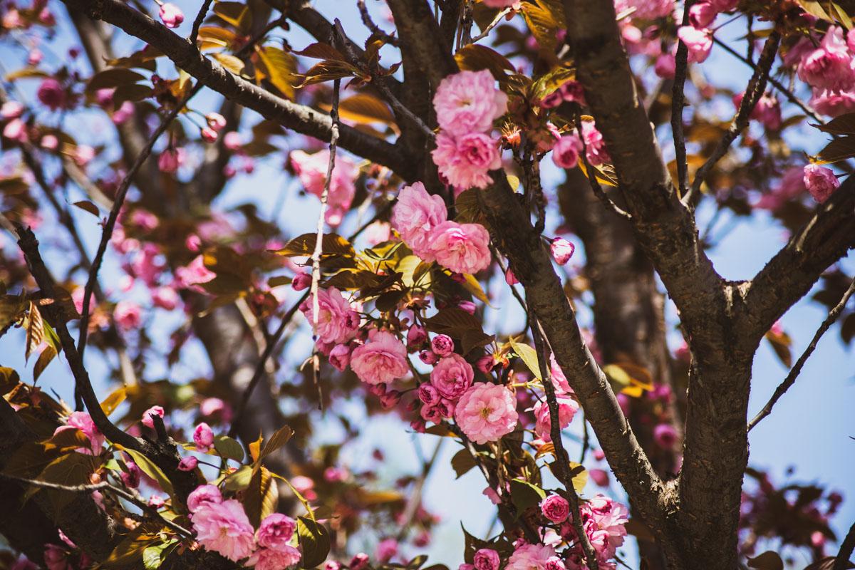 Коричневый и розовый - как идеальная пара