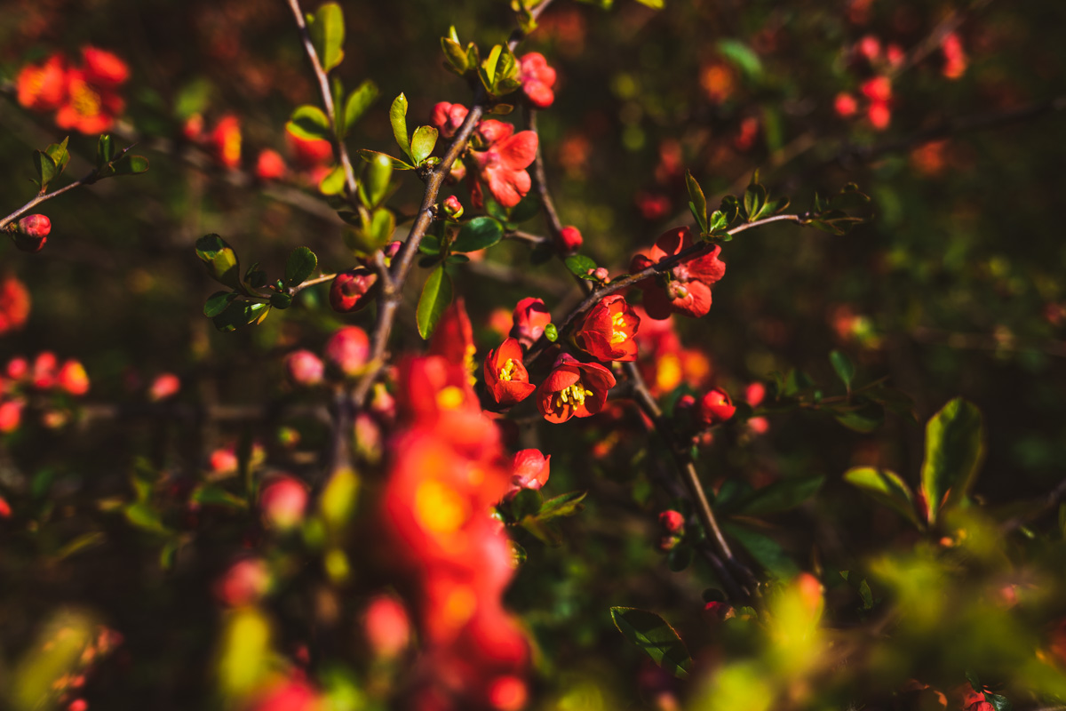 Солнышко играет лучами на цветах и рисует свои картины