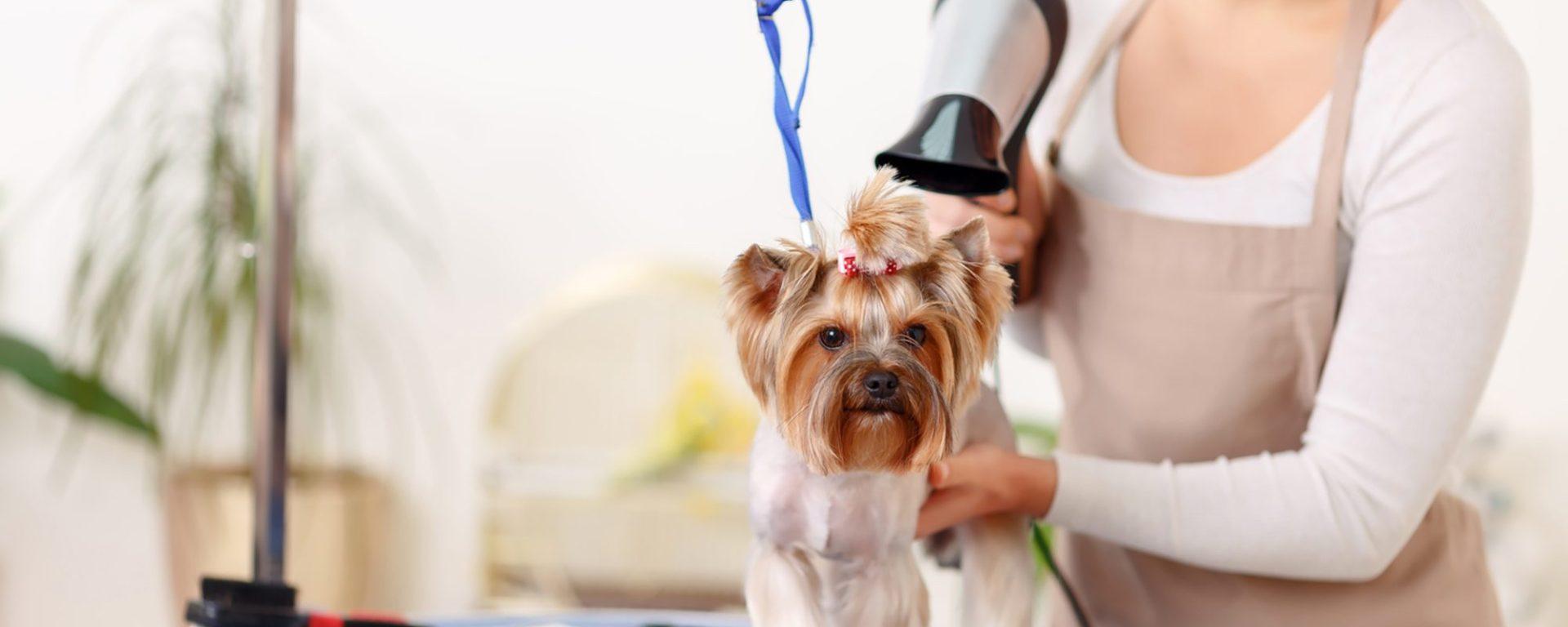 Стрижка только подчеркивает натуральную красоту собаки