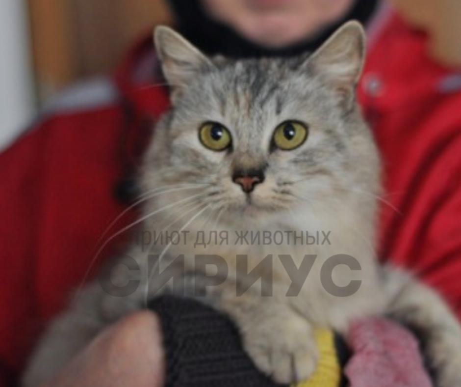 Кошечка Шая без ума от обнимашек