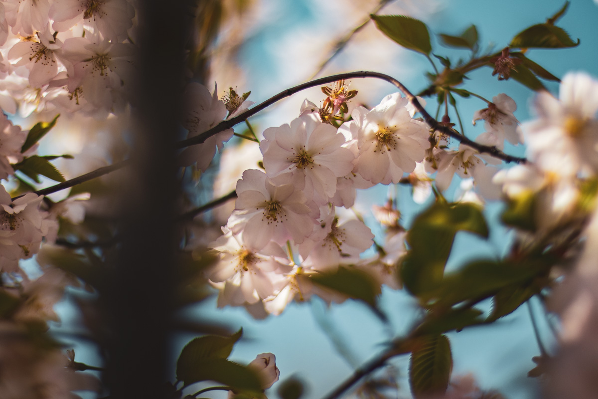 Особенно выигрышно цветы смотрятся при взгляде вблизи