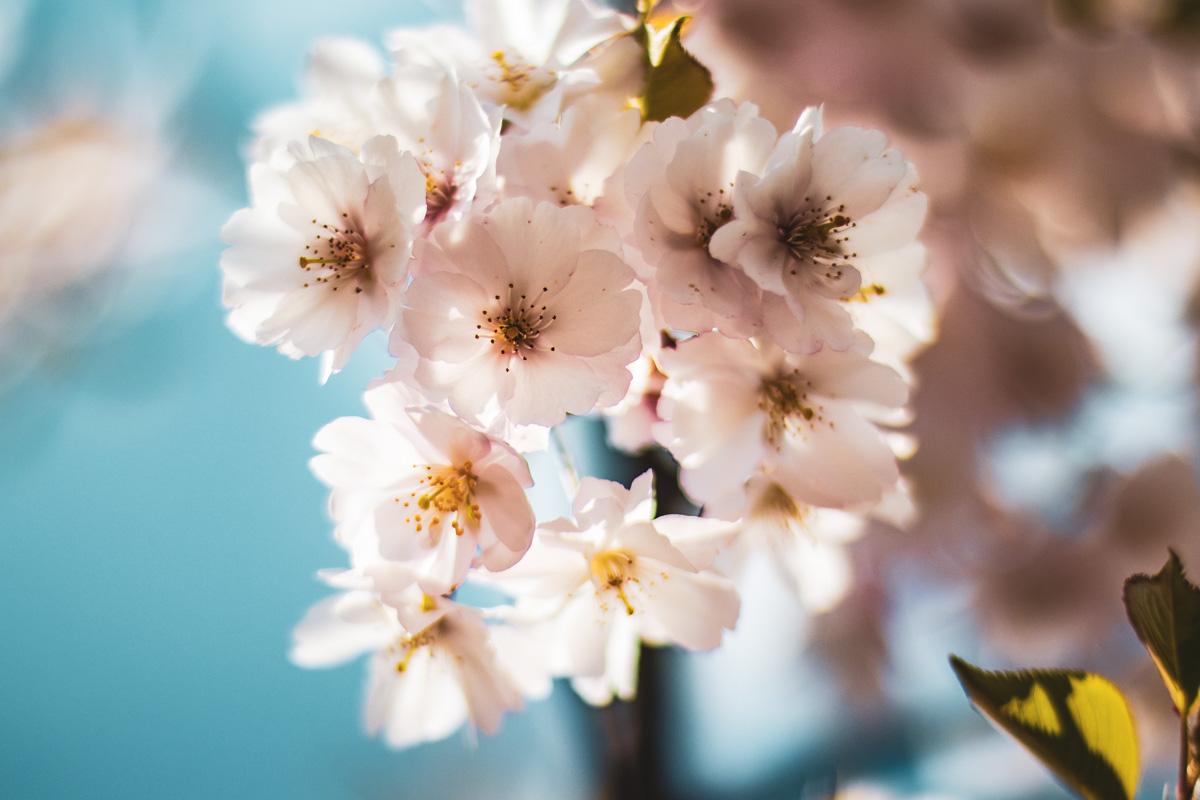 Нежные цветы приковывают взгляд и вдохновляют