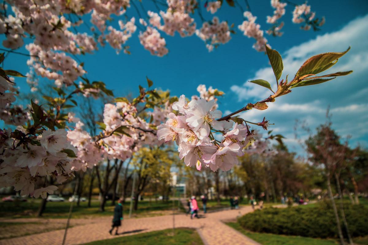 Неудивительно, что на дорожках в парке много людей - провести свой выходной в окружении прекрасного - что может быть лучше?
