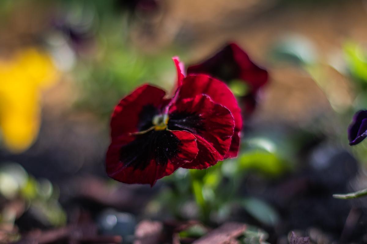 Красочные цветы и правда даже выглядят ароматно
