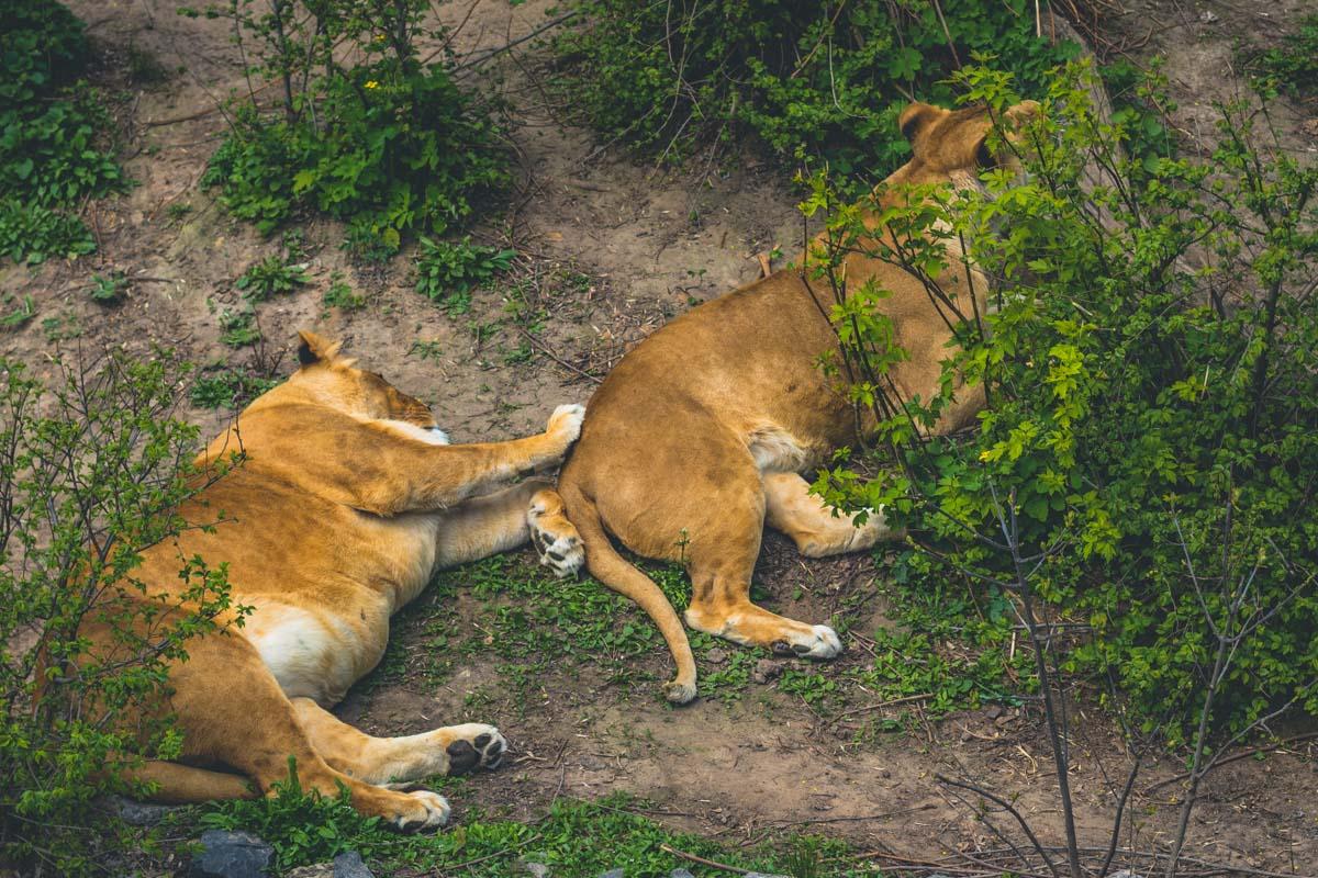 В зоопарк Киева можно ходить нескончаемое количество раз