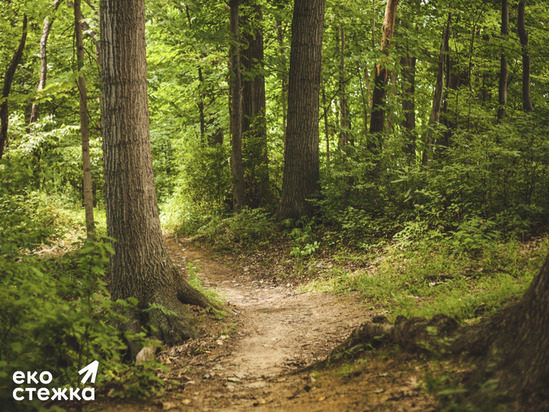 В Голосеевском лесу появится экотропа