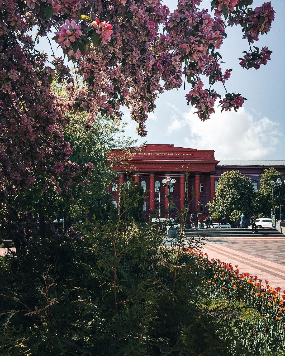 В парке Шевченко сейчас красота. Фото: @zhukevych