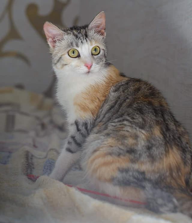Талантливая кошка Яшма ищет дом