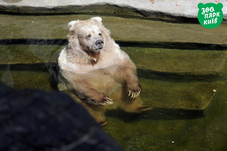 Хорош бассейн, да жаль, что без джакузи