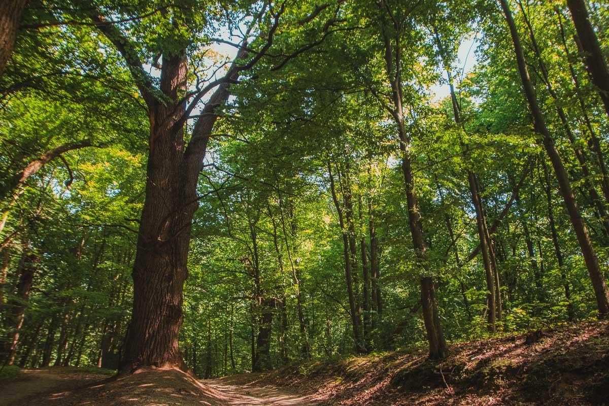 На пути следования вы посетите четыре разных экосистемы