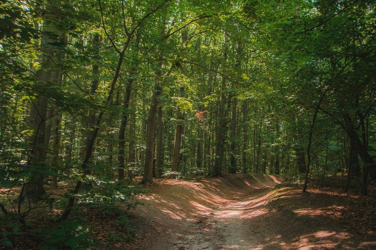 В Голосеевском лесу обитают редкие виды животных и непрерывно поют птицы