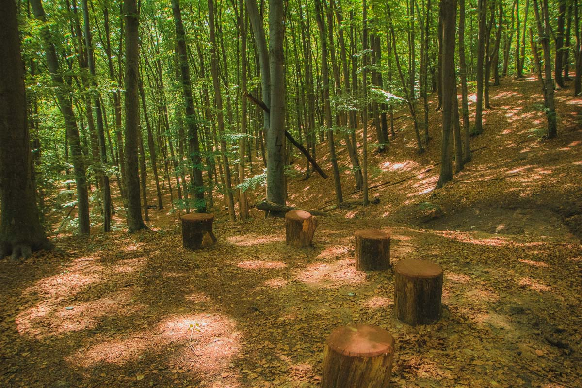 Экотропа Голосеевского леса стоит того, чтобы пройти ее полностью и влюбиться в природу