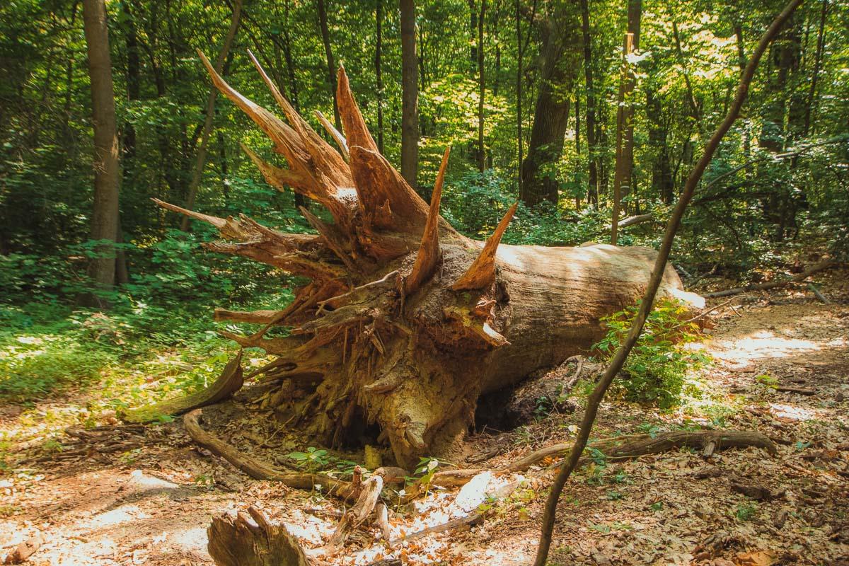 В лесу есть локация поваленных деревьев, которые тоже вносят свой вклад в экосистему
