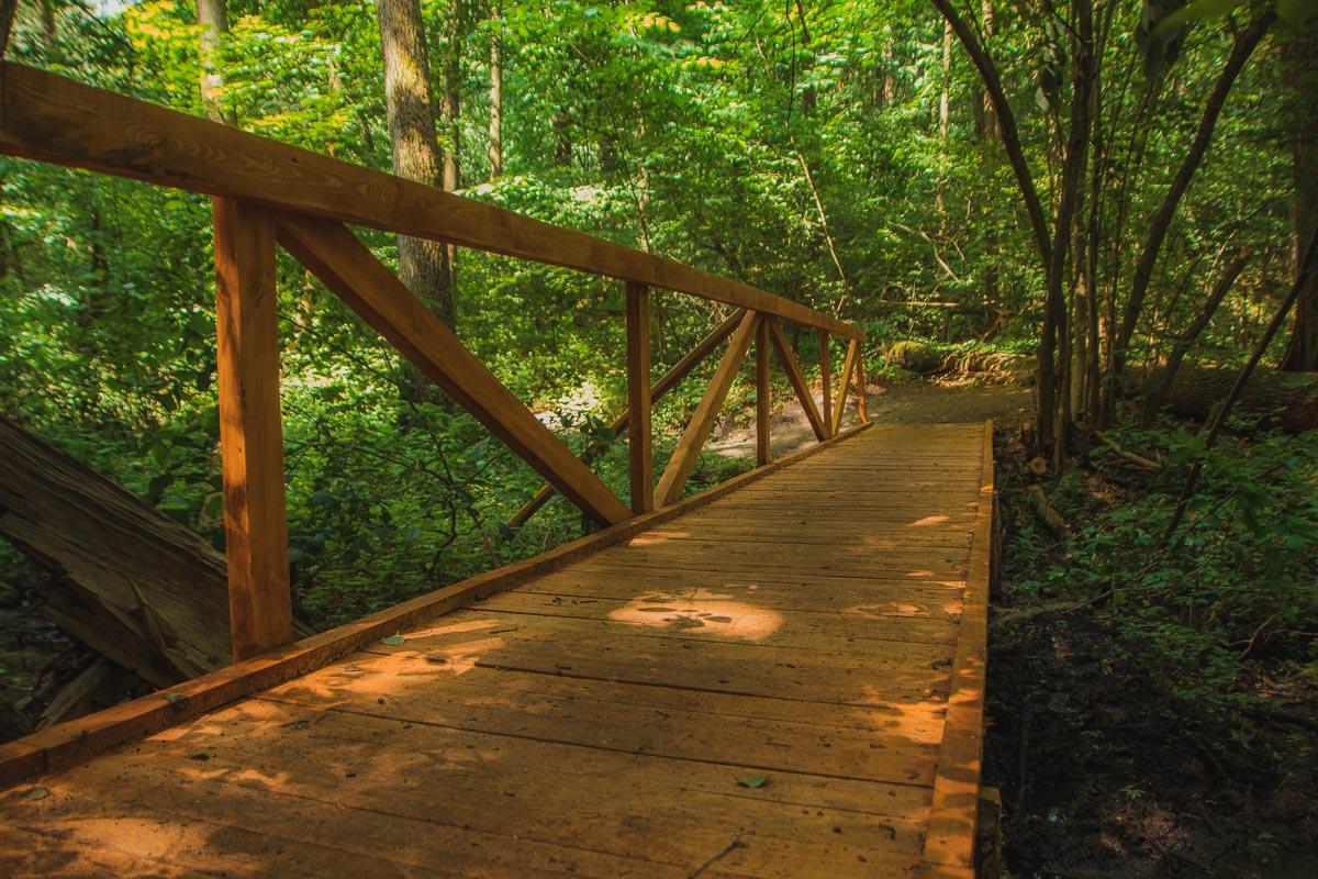 Экотропа позволяет увидеть болотистую местность. Для этого здесь построили мостик