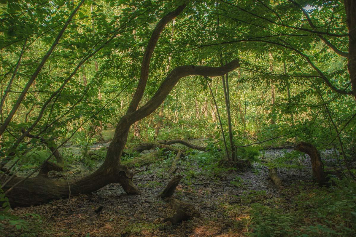 Пейзажи Голосеевского леса удивляют и вдохновляют