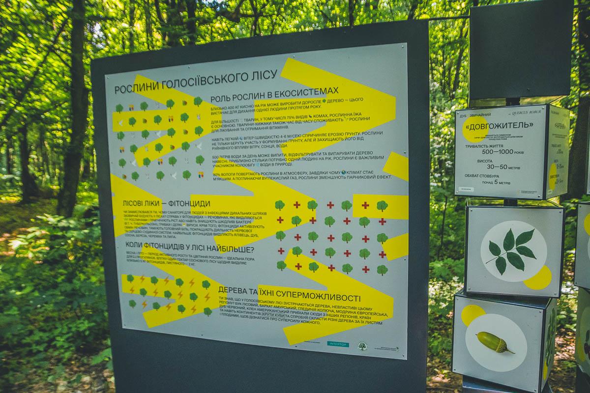Стенды рассказывают о местности, где вы находитесь. Кроме того они интерактивны, их можно покрутить и, например, собрать листья и плоды какого-то дерева