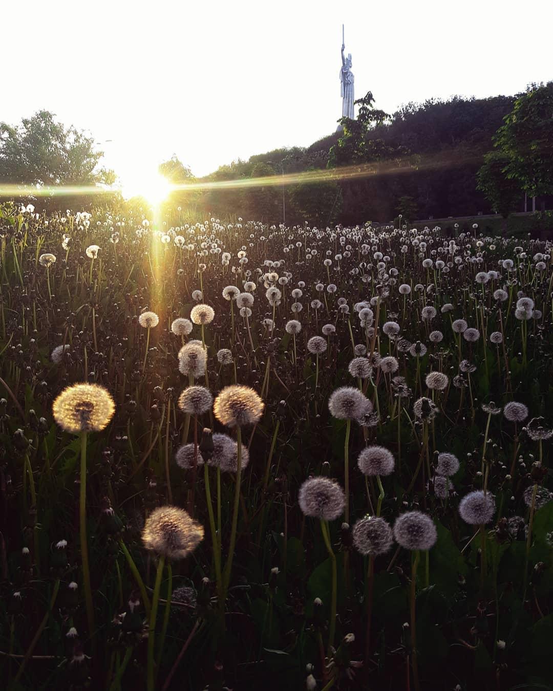 Весна пришла, а вместе с ней - такие вот яркие, почти пасторальные снимки в социальных сетях. Фото: @istetsen