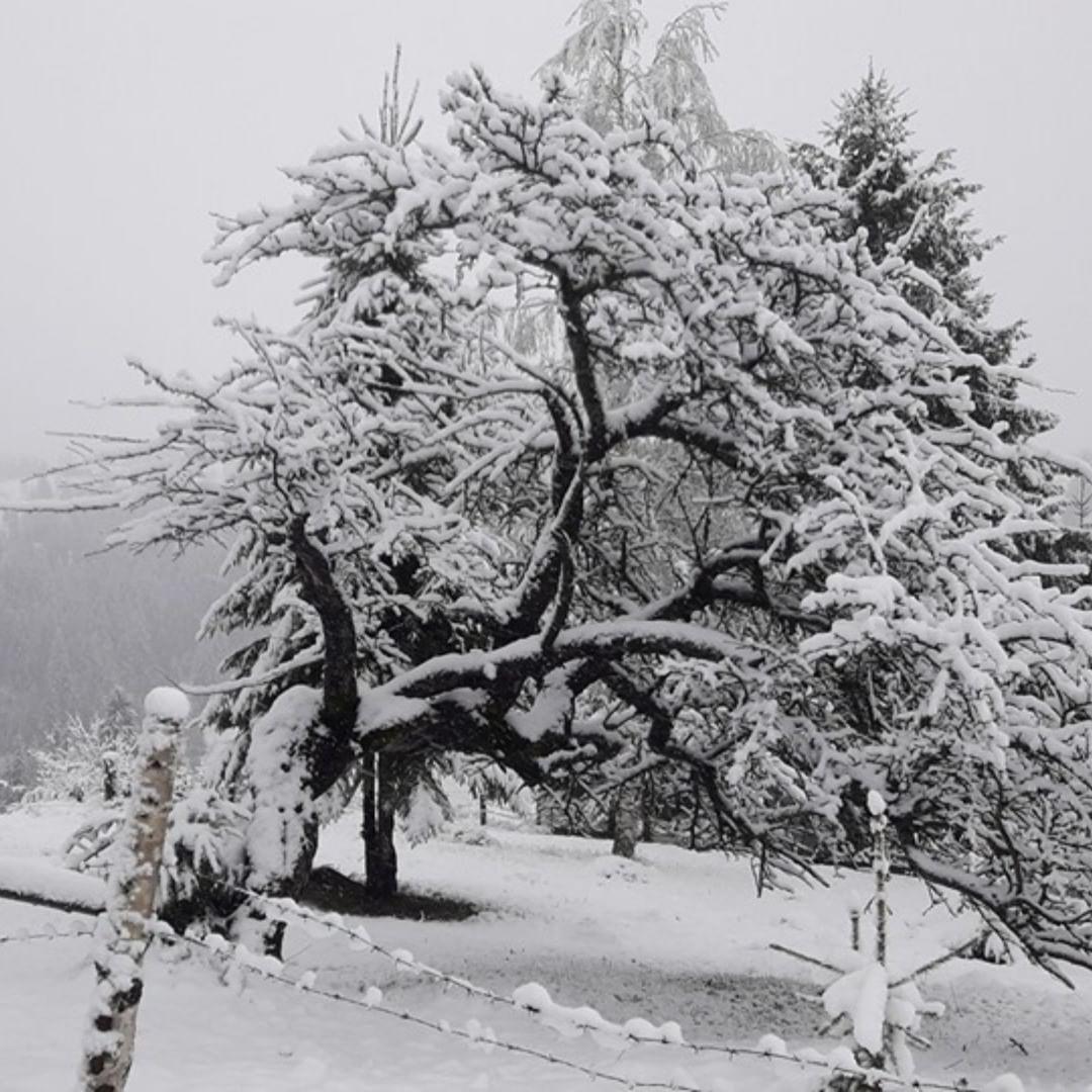 @nagashku удивляется такому обилию снега в мае. Но ведь это и есть часть очарования Карпатской сказки