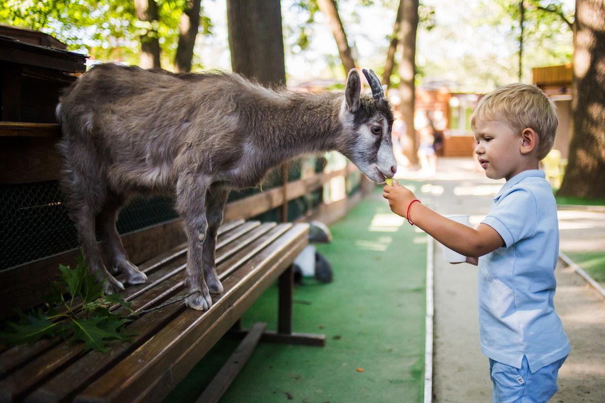 """Фотозона """"Пикник Сад"""" может стать источником ваших ярких фотографий на все лето"""