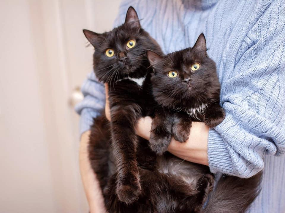 Кошечки Роза и Лиля с радостью поселятся в вашем доме
