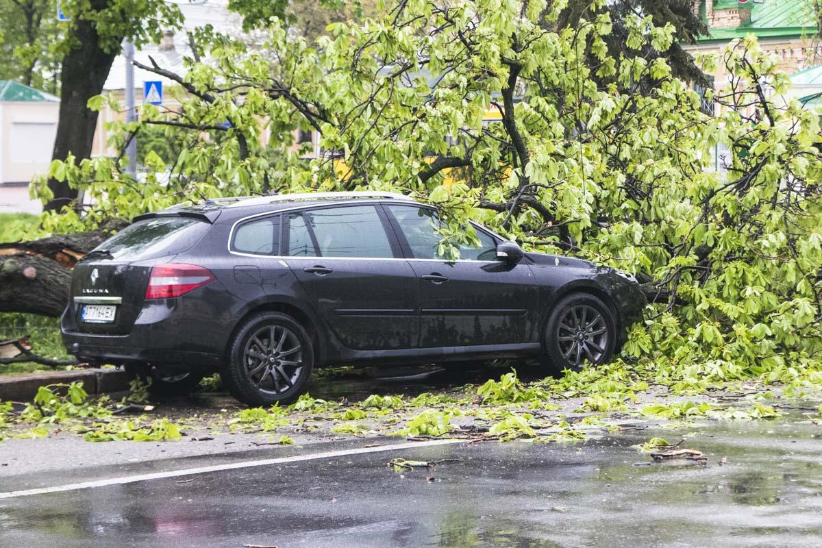 На улице Лаврской дерево упало на припаркованный автомобиль Renault