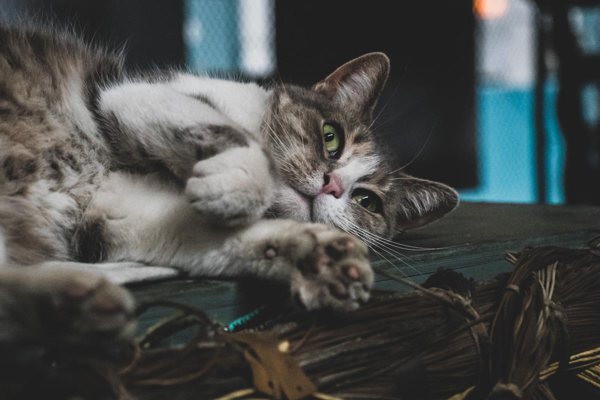 В помещениях предприятия трудятся не только люди, но и коты, которые снабжают работников позитивной энергией