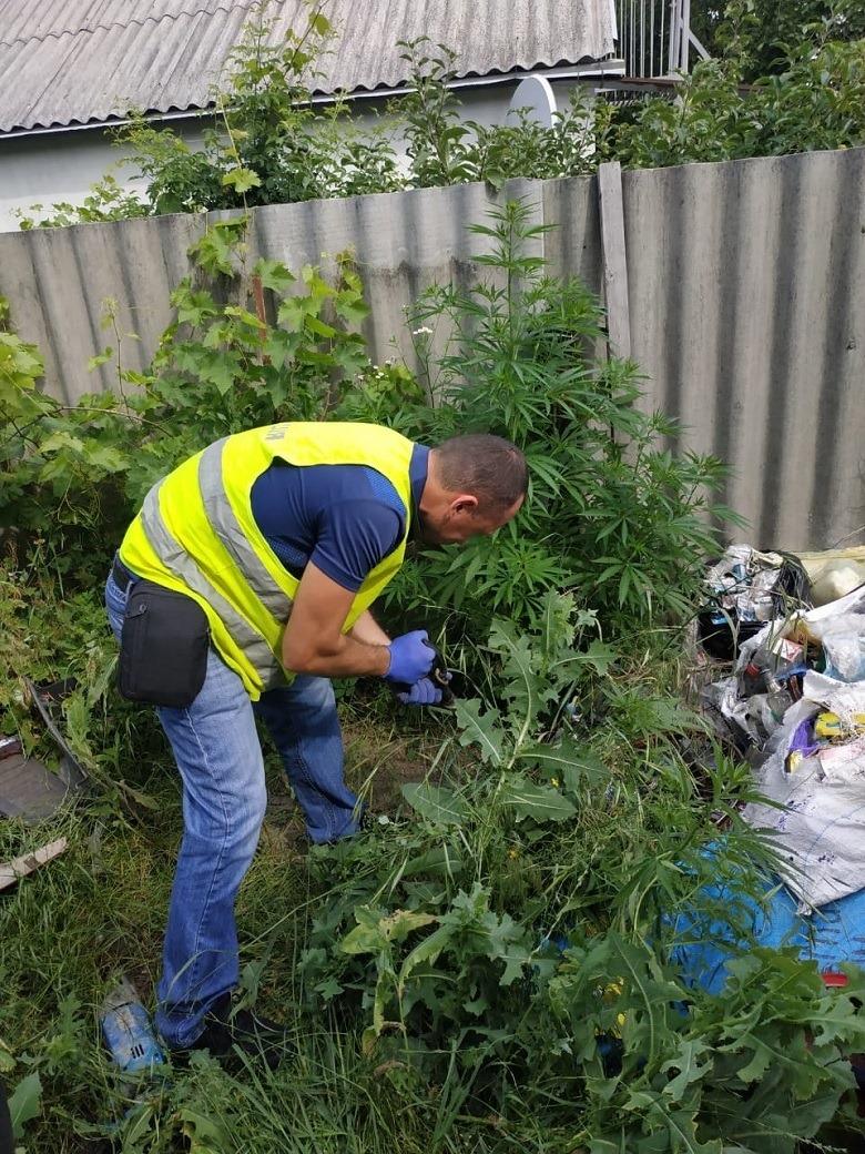 Во дворе же дома полицейские обнаружили растения, похожие на коноплю