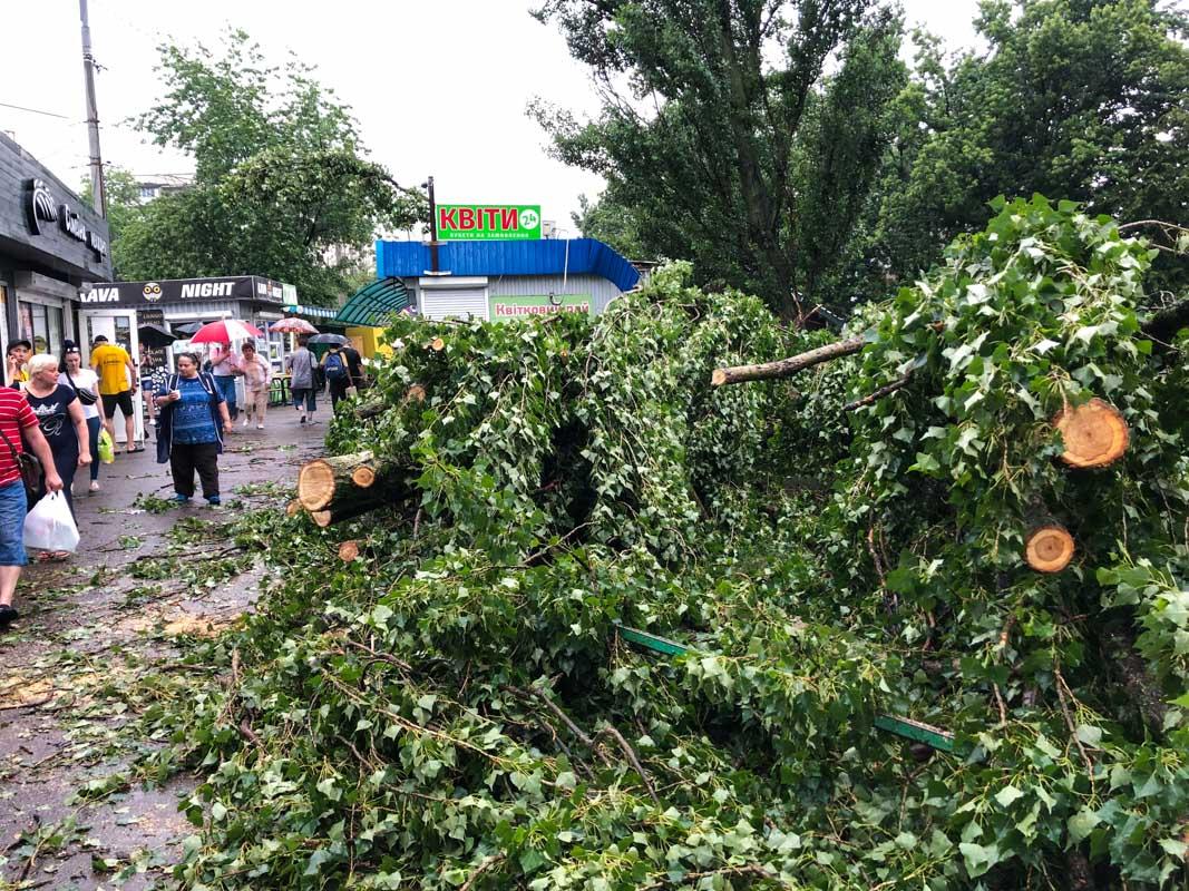 В Киеве на пожилую женщину упало дерево