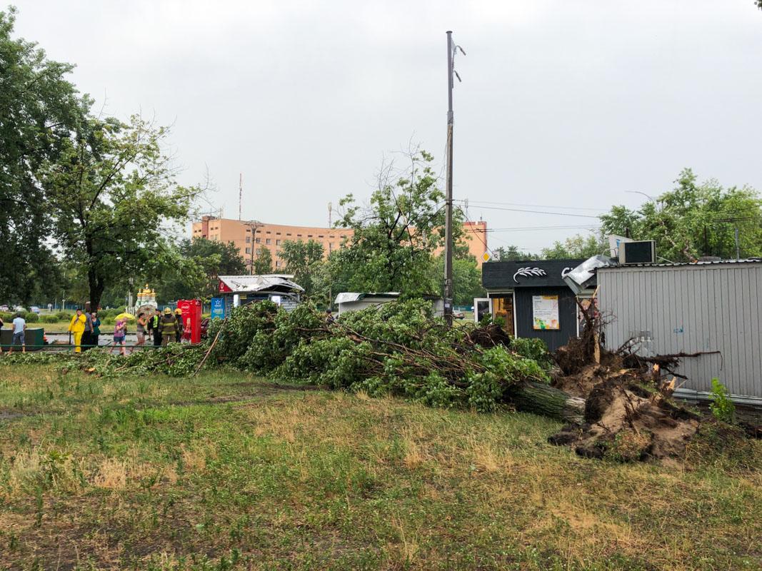 Предварительно, женщина стояла возле дерева во время дождя