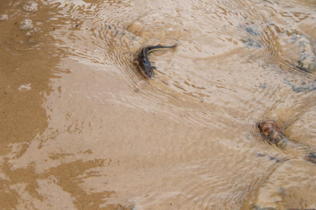 На Оболонской набережной собрались десятки жителей столицы и наблюдали, как могущественную реку зарыбляли мальками стерляди