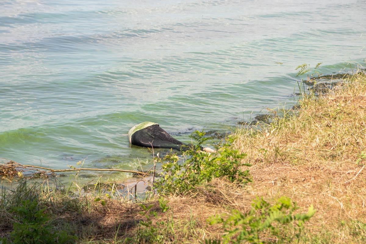 Тело лежало на берегу Днепра и частично находилось в воде