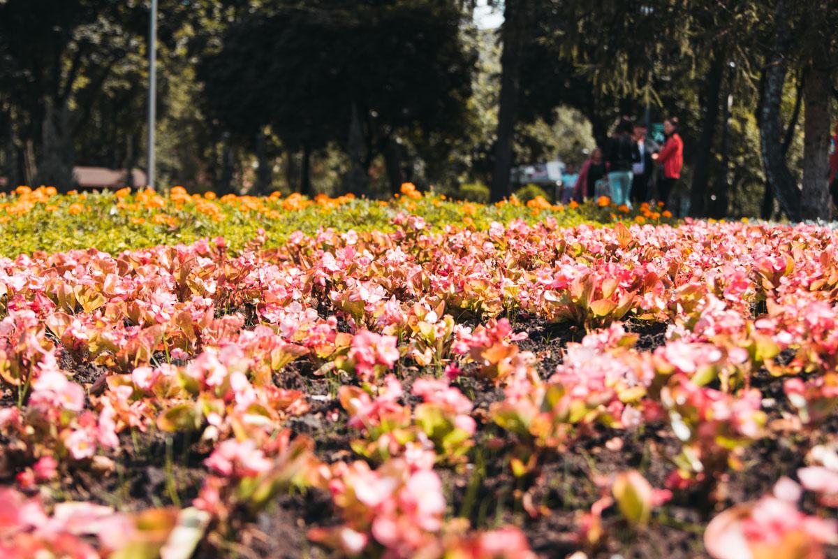 Новые кусты украшают парк и очень нравятся молодежи