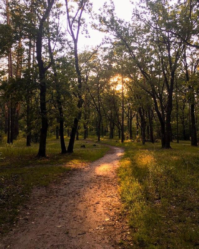 Лесной свежести и вам в ленту. Почувствовали запах шишек? Фото: @mary_marriardi