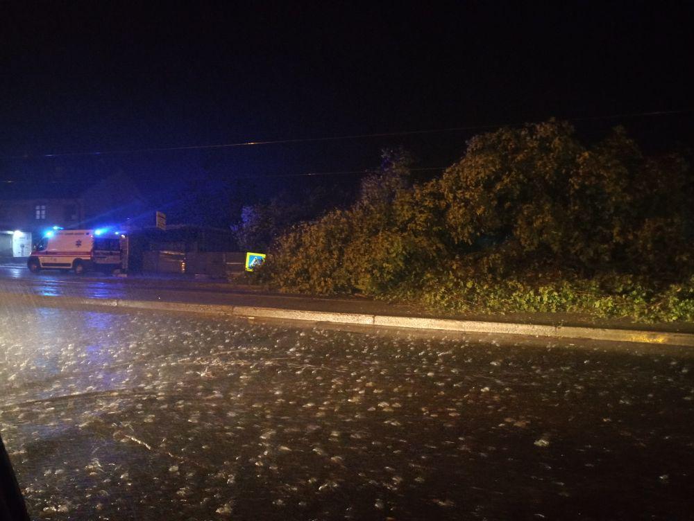 Из-за непогоды на остановку в Днепре упало дерево