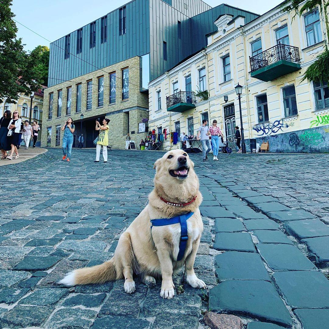 Милый пушистый пес наслаждается прогулкой по Андреевскому спуску
