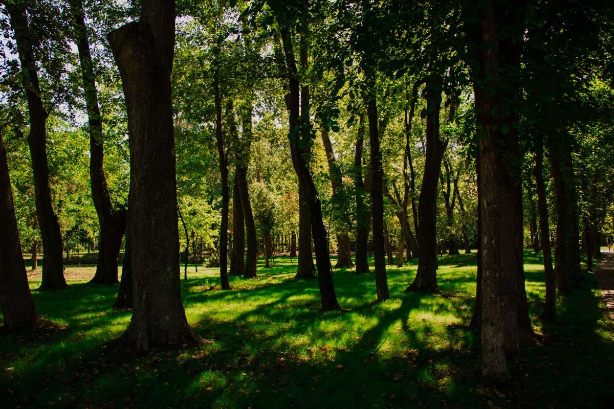 Появятся в парке и новые деревья - всего их высадили порядка двух сотен