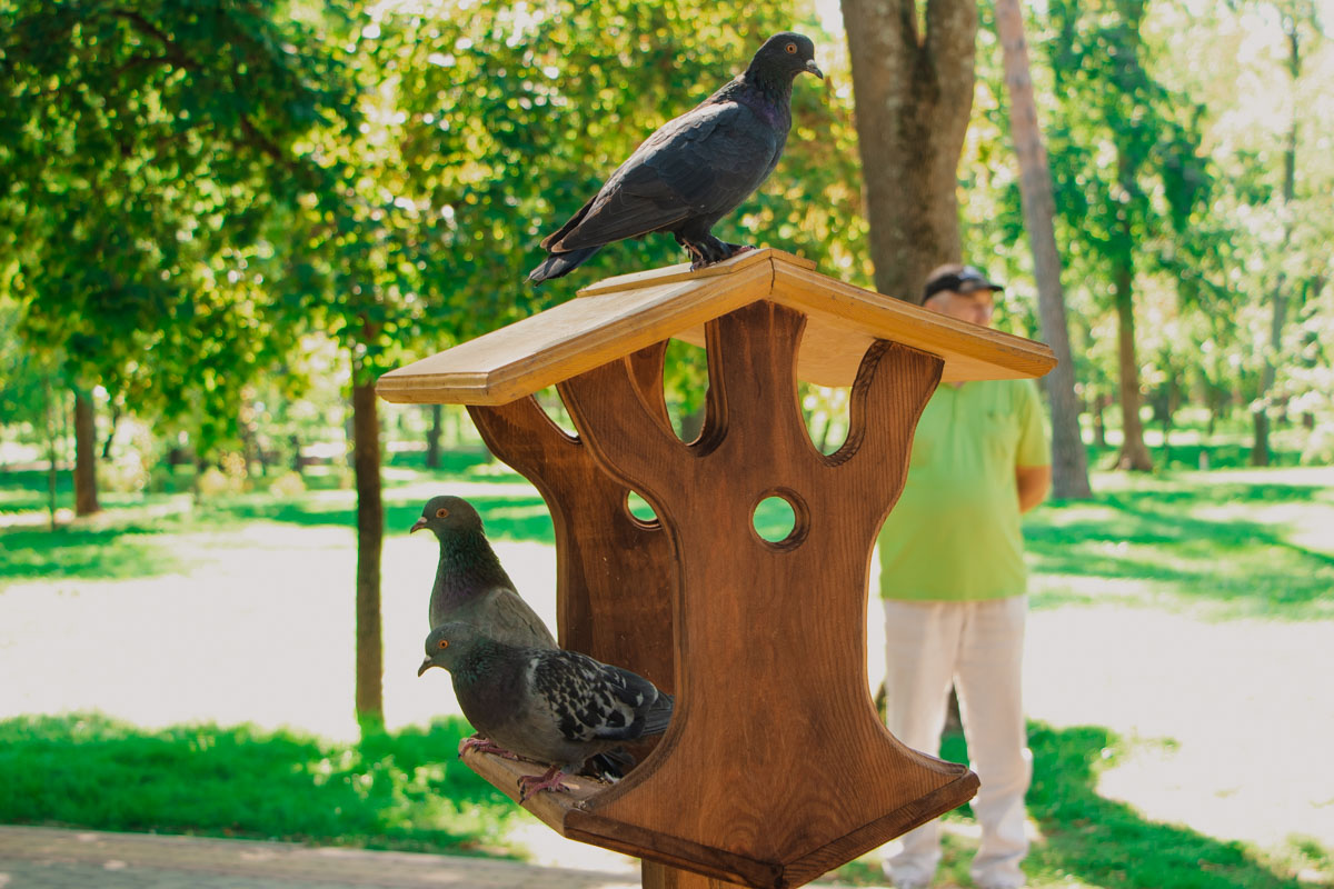Речь, конечно же, о кормушках для животных и, как на фото - для птиц
