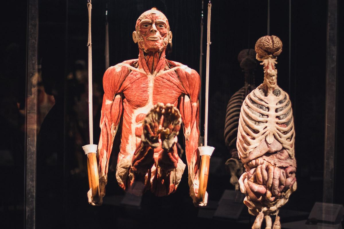 В Киеве на ВДНГ открылась необычная выставка настоящих тел после смерти человека