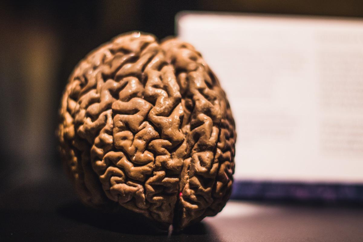 Только представьте, это настоящий человеческий мозг