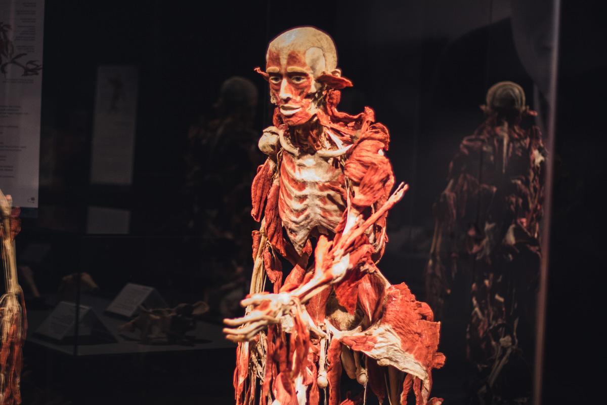 Цель выставки - показать, как человек влияет на свое тело