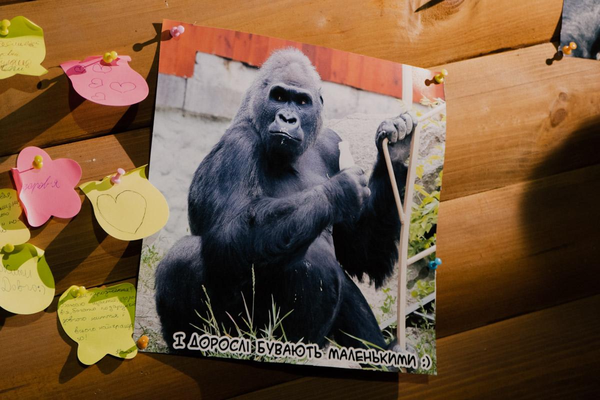 Единственная горилла в Украине по имени Тони отметил день рождения
