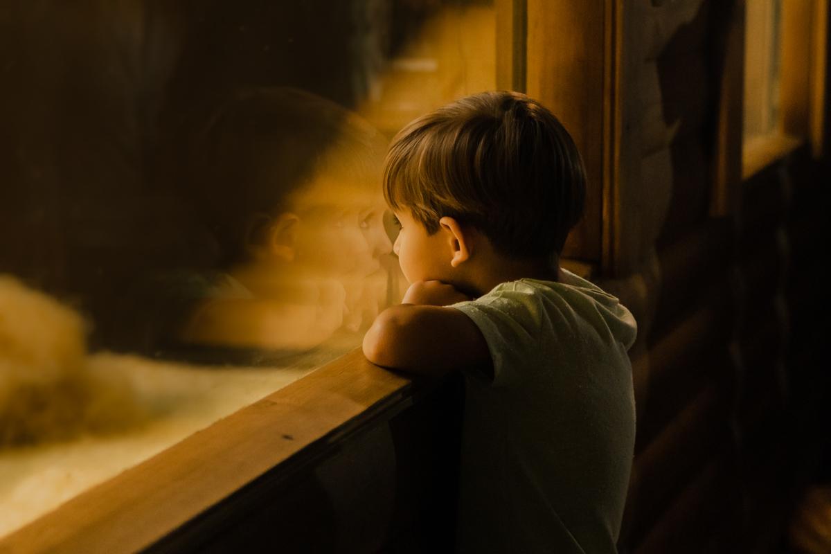 """Дети прильнули к стеклам вольера еще до выхода Тони """"в свет"""""""