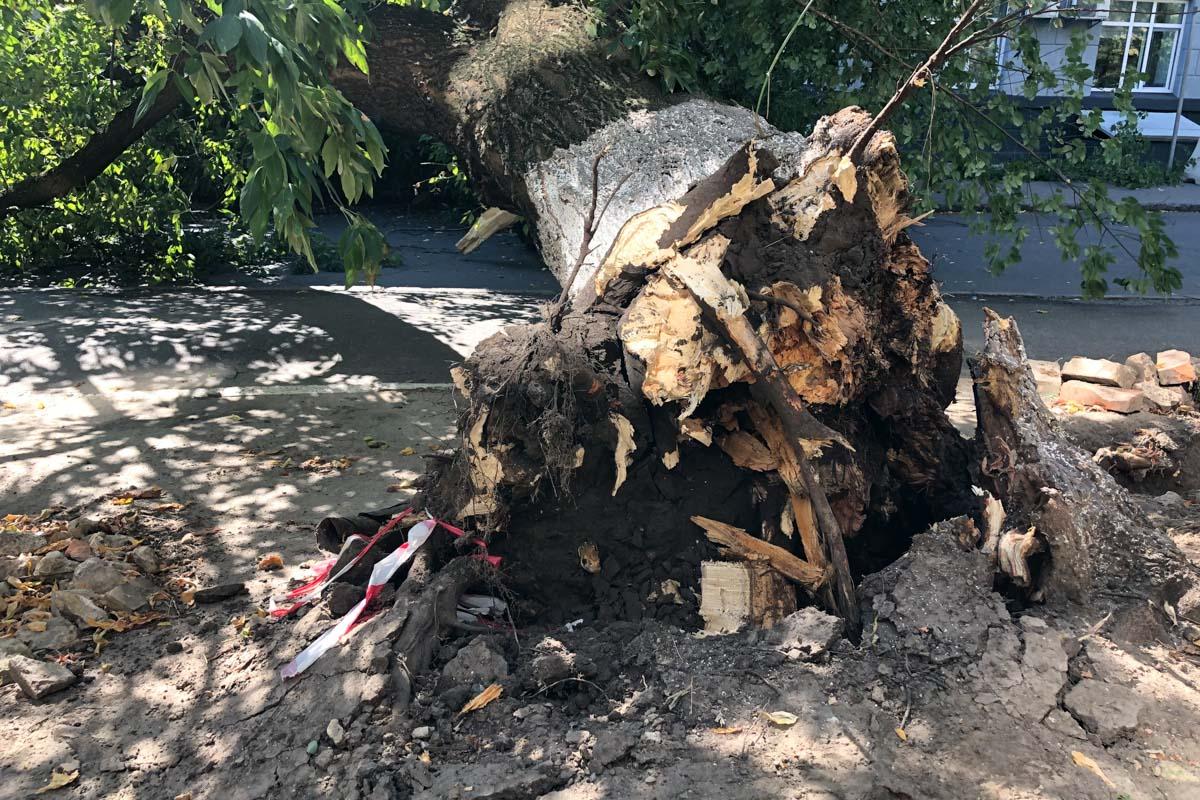 В Печерском районе Киева дерево упало на женщину 50-60 лет