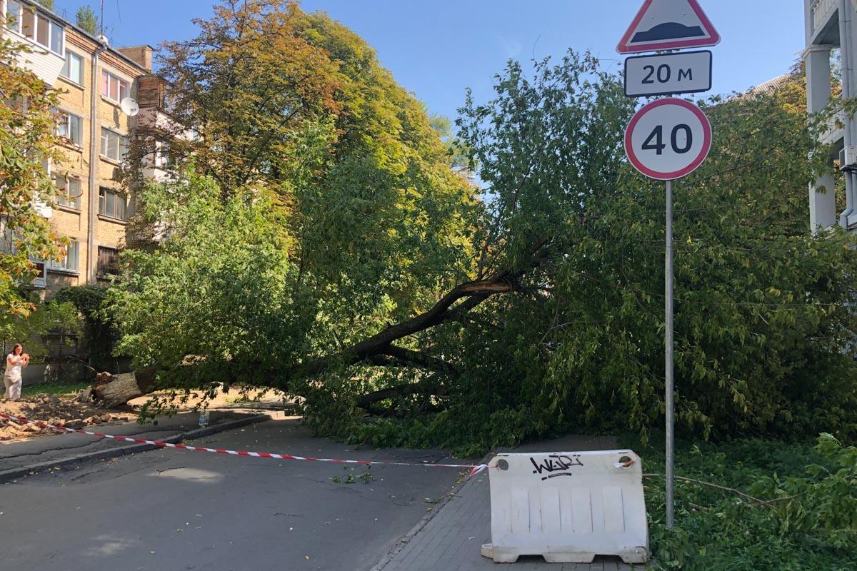 Инцидент произошел на улице Чигорина, 59