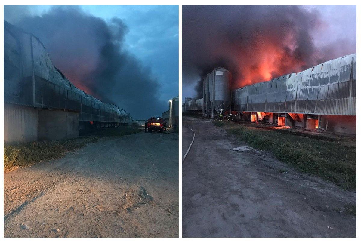Под Киевом вспыхнул ангар птицефабрики