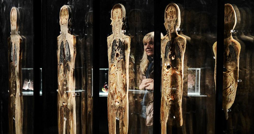 Выставка тел пугает и многое объясняет одновременно